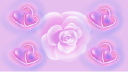 Royalty Free HD Video Clip of a Rotating Rose Surrounded by Shimmering Hearts