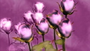 Royalty Free Video of Rotating Purple Rose Stems