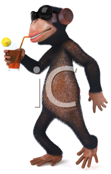 Royalty Free Clipart Image of a Monkey Drinking