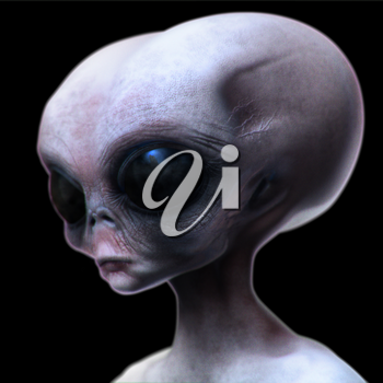 Grey alien with elongated head/skull looking downward isolated on black.