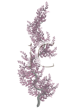 Pink vine with pink bark on a white background