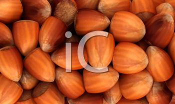 Royalty Free Clipart Image of Filbert Nuts Background