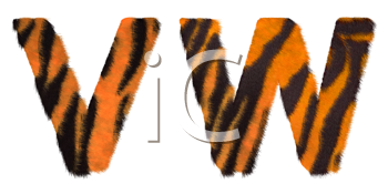 Royalty Free Clipart Image of Tiger Fell Font V and W