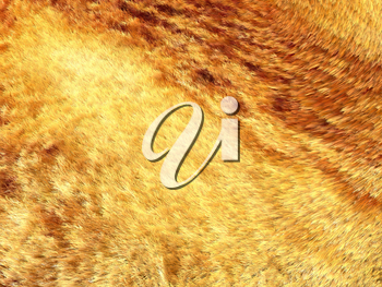 Yellow and brown fox fur pattern or background. Useful for fashion