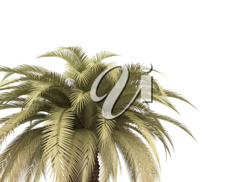 Royalty Free Clipart Image of Palm Tree