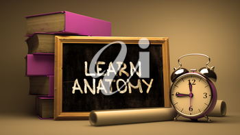 Learn Anatomy Concept Hand Drawn on Chalkboard. Blurred Background. Toned Image. 3d Illustration.