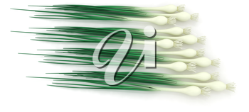 Green onion on a white background