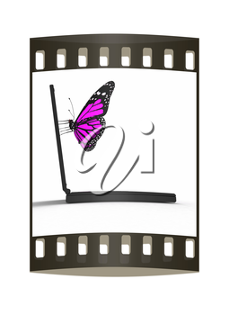 butterfly on a notebook. The film strip
