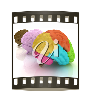 Human brains. The film strip