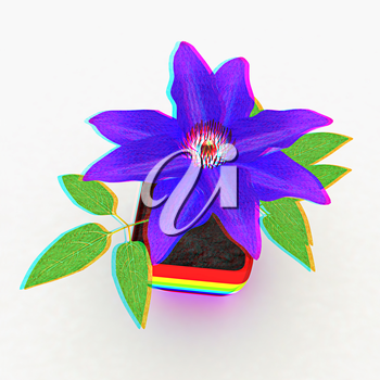 Clematis a beautiful flower in the colorful pot. 3D illustration. Anaglyph. View with red/cyan glasses to see in 3D.