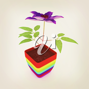 Clematis a beautiful flower in the colorful pot. 3D illustration. Vintage style.