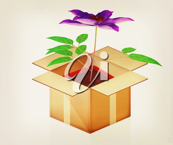 Clematis in a pot out of the box on a white background. 3D illustration. Vintage style.