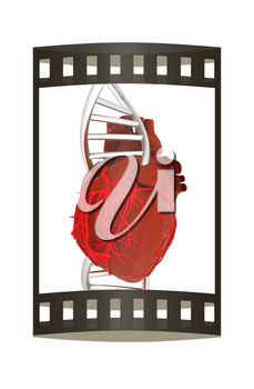 DNA and heart. 3d illustration. The film strip