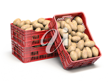 Potatos in plastic crates isolated on white. 3d illustration