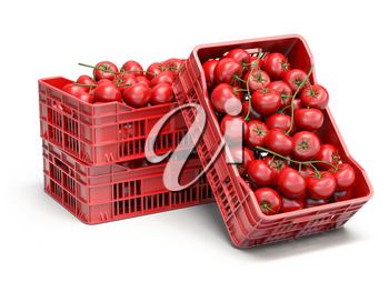 Tomatoes in plastic crates isolated on white. 3d illustration