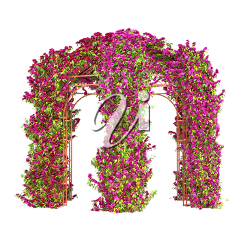 The arched arbor with curly purple flowers and green leaves pergola