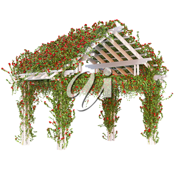 Pergola triangular shaped bushes with red climbing roses. Ivy flowers roses pergola