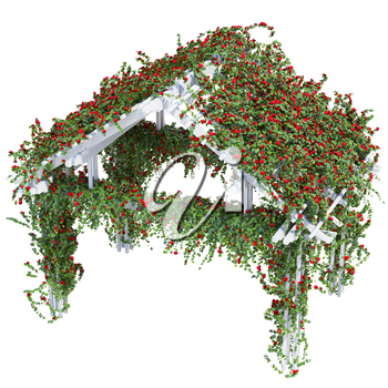 Triangular pergola with purple flowers and green leaves. Roses on a white background
