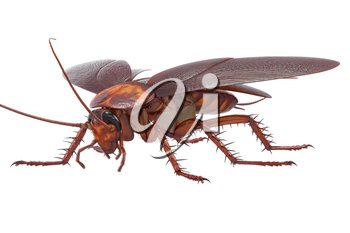 Cockroach bug insect creature disgusting pest. 3D rendering