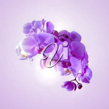 Bouquet of magenta orchids on color background.